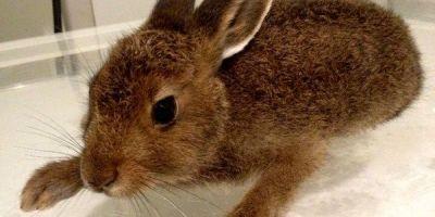 Приём грызунов и кроликов и другие ветеринарные услуги для грызунов и кроликов в Санкт-Петербурге. Чистка ушей, стрижка когтей и колтунов и другие услуги.