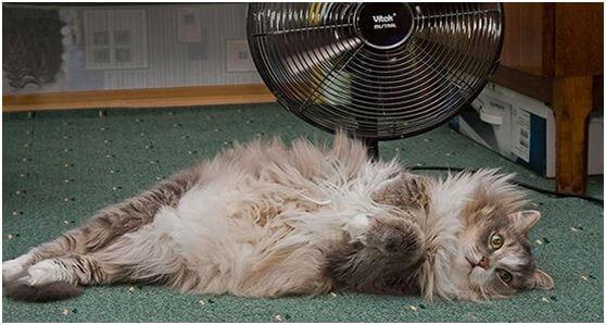 Профилактика теплового удара у кошки путём проветривания помещения.