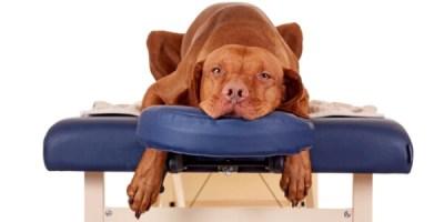 Реабилитация для животных в Санкт-Петербурге. Массаж, сухая беговая дорожка, занятия по фитнесу, дарсонвализация и другие физиотерапевтические процедуры.