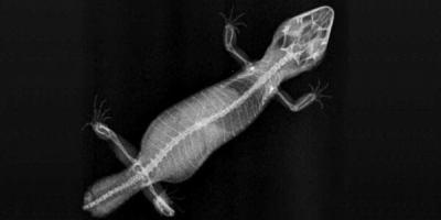 Рентген для животных в Санкт-Петербурге. Рентгенологические исследования, в том числе, рентген на дисплазию тазобедренных суставов и стоматологический рентген.
