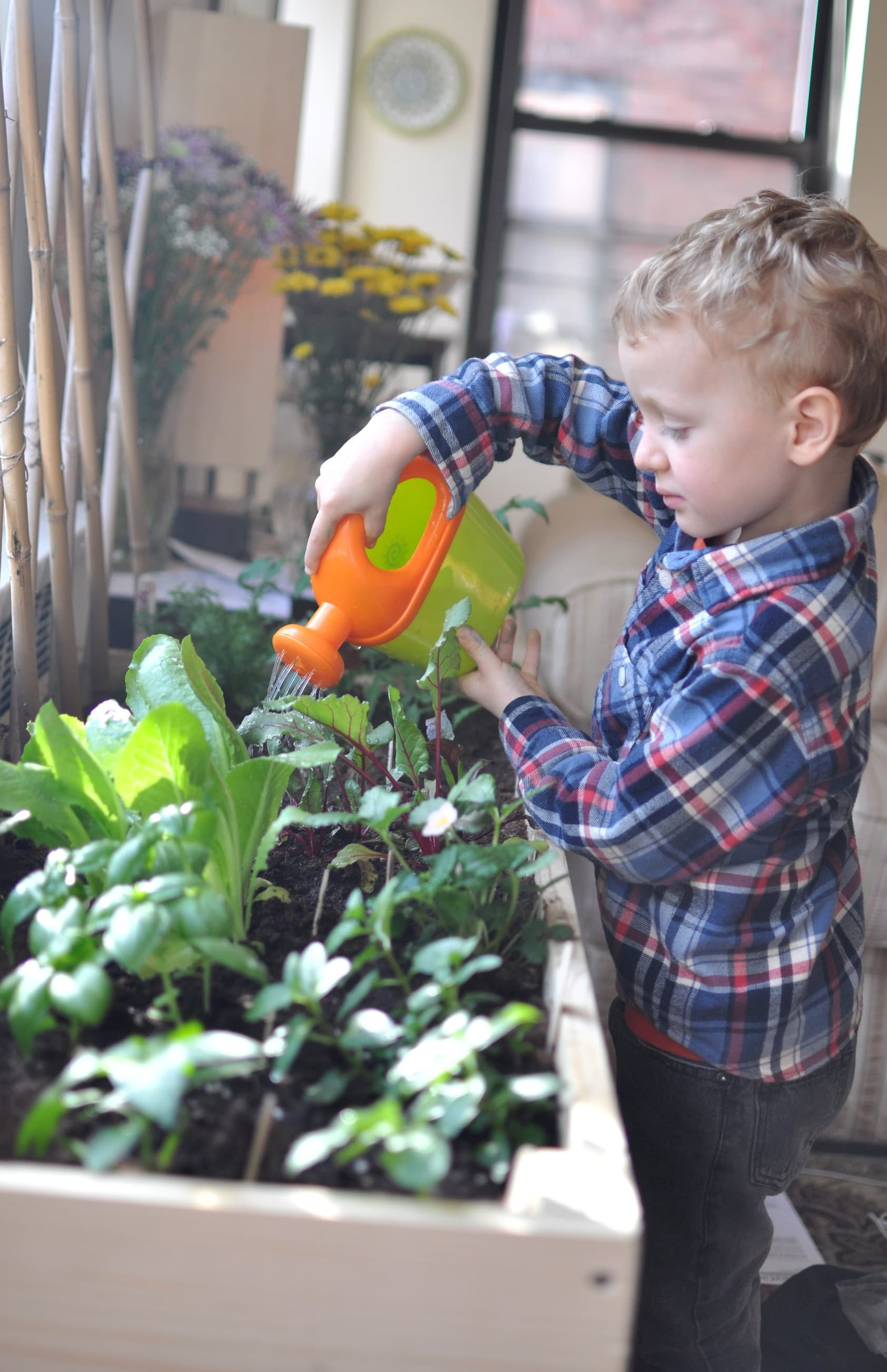 Indoor Gardening For City Kids