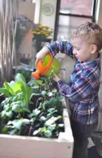 Indoor Gardening for City Kids | Gimme the Good Stuff