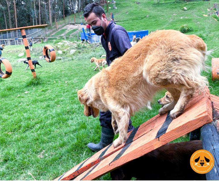 Obediencia Canina Básica