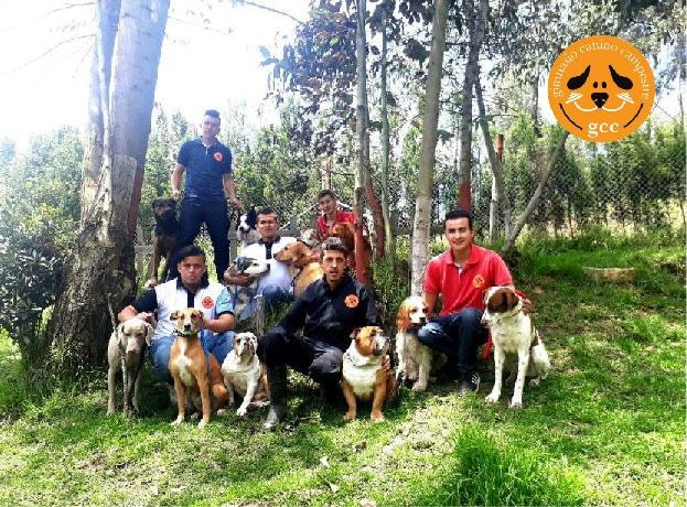 Hotel para perros Bogotá Gimnasio Canino Campestre