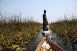 delta Okavanga
