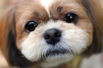 愛犬が体調不良で嘔吐したときにしてあげる応急処置のやり方を紹介!
