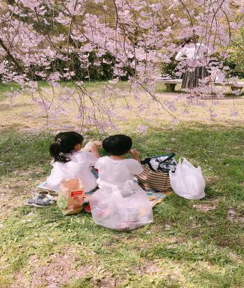 京都御所のお花見に行った感想
