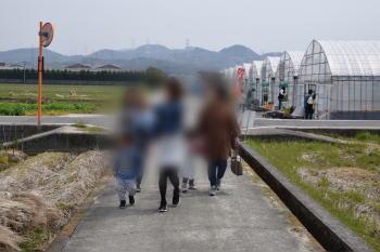 貴志川観光いちご狩り園のいちご狩りで特に良かった点は?