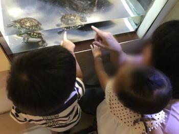 和歌山県立自然博物館を体験した感想
