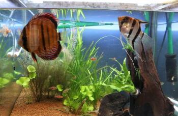 一人暮らしで熱帯魚飼育!長期旅行なら熱帯魚水槽の水質管理が必須!?
