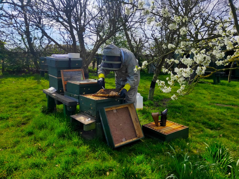 Beekeeping at Cooper King Distillery