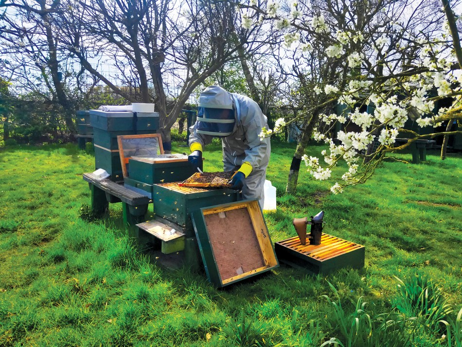 The apiary at Cooper King Distillery