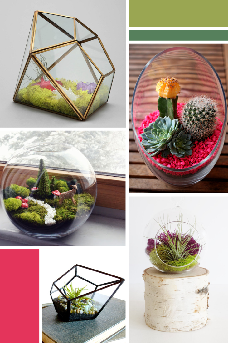 Most Inspiring Terrariums