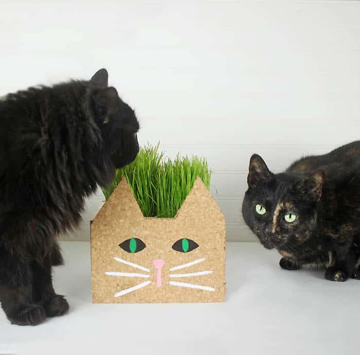 Cat Planter DIY