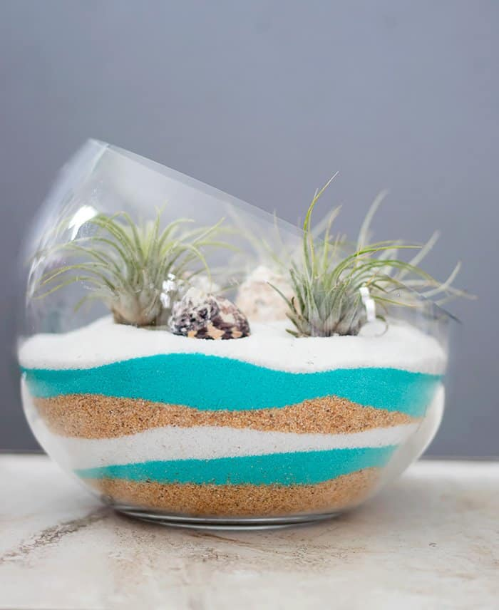 Sand Art Air Plant Terrarium DIY