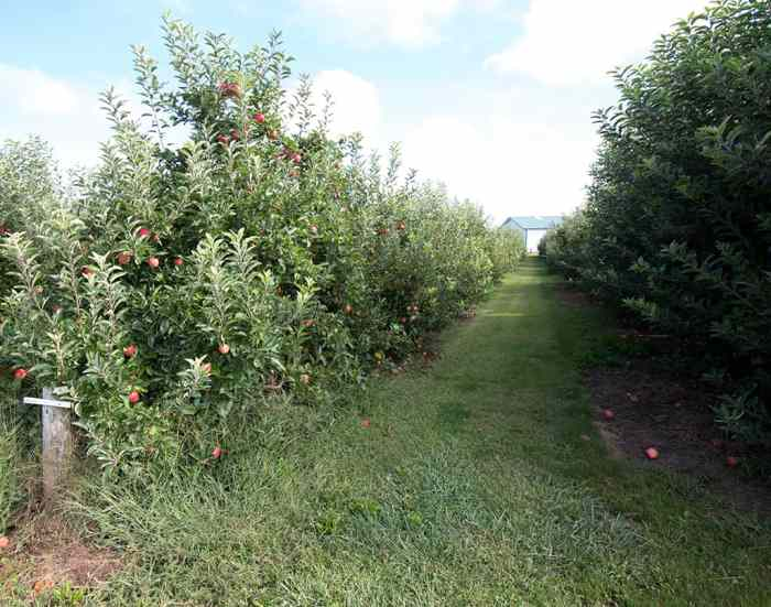 Seven Ponds Orchard