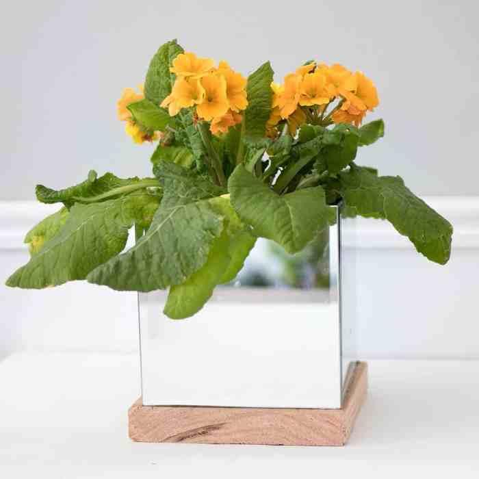 DIY Mirror Planter