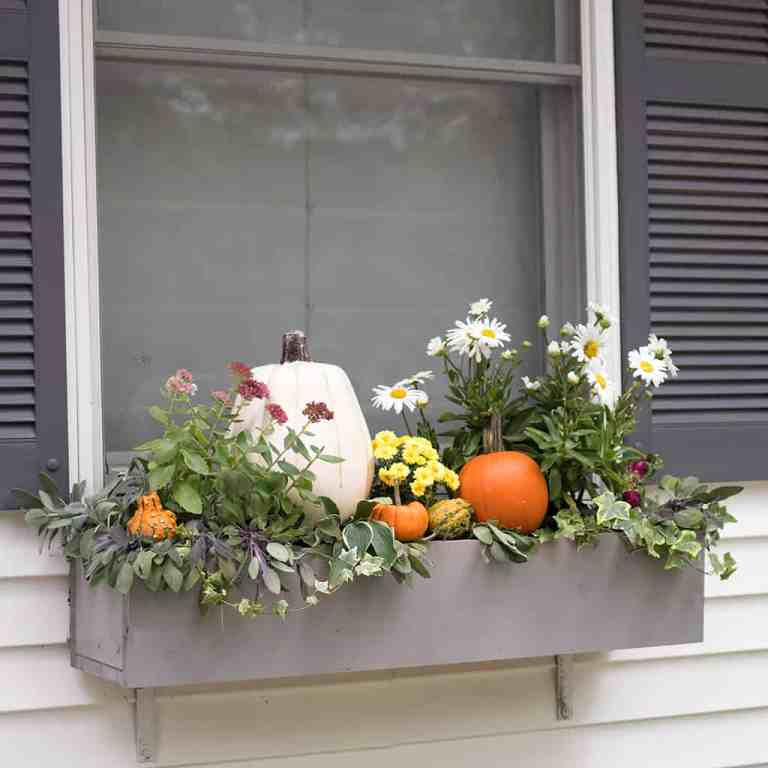 Easy Fall Window Boxes