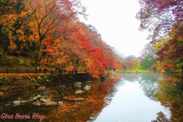 naejangsan autumn foliage
