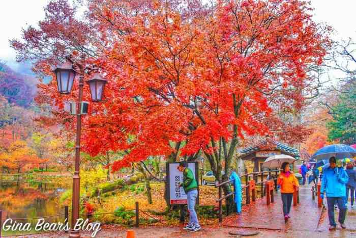 autumn date spots korea