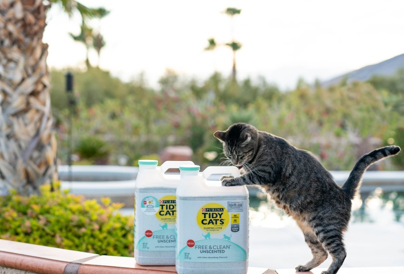 The Best New Stuff to Spoil Your Cats With