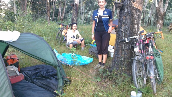 Camping in a rubber plantation