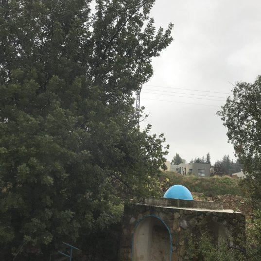 עצי חרוב ותאנה עתיקים מתנשאים מעל קבר רבי ישמעאל בחורבת פראדיה שעל גדת נחל פרוד בגליל העליון