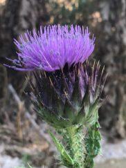 בוסתן כיאט - פרח הגדילן