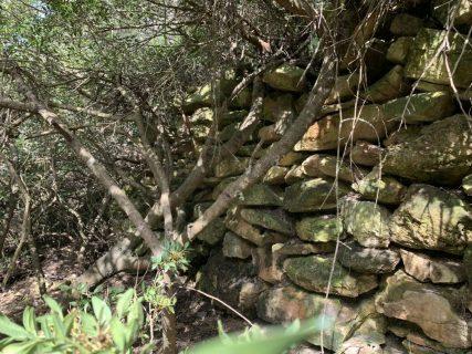 נחל עובדיה (מארס 2020) העיר האבודה - לאורך היובל הדרום מזרחי - שרידי קיר תמך על גדת הנחל