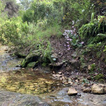 נחל עובדיה (מארס 2020) - מים זורמים אחרי הגשמים בקטעים מהנחל. היובל הדרום מזרחי.
