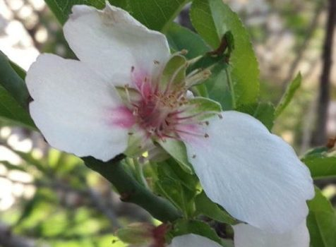 מארס (אדר) – פריחת האביב