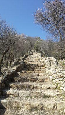 סטף - המדרגות היורדות מהמעיינות וצידן חלקות הירק