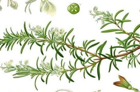 איך להתרחק מחומרי טעם וריח מזיקים? המדריך להכנת תבלינים בבית