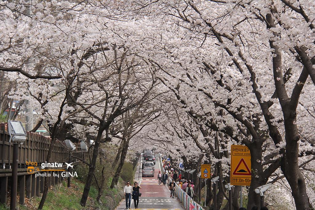 【2020河東十里櫻花路】 韓國釜山|賞櫻必去一日遊|洛東江大渚生態公園一帶美美夜櫻