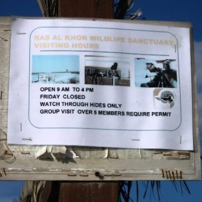 Ras Al Khor Wildlife Sanctuary (and Driving Adventure) – Part One