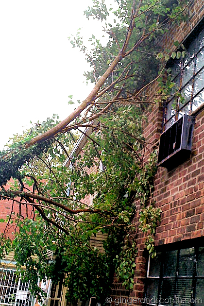 Tree Down in Queens