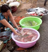 The Mekong Fish Vendor