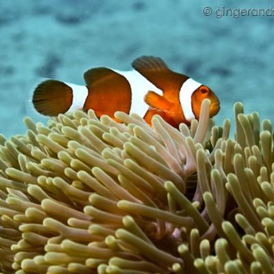Scuba Diving Thailand – Phuket and Koh Lanta
