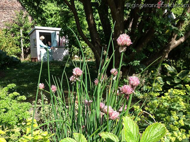 Dunbar Garden - chives
