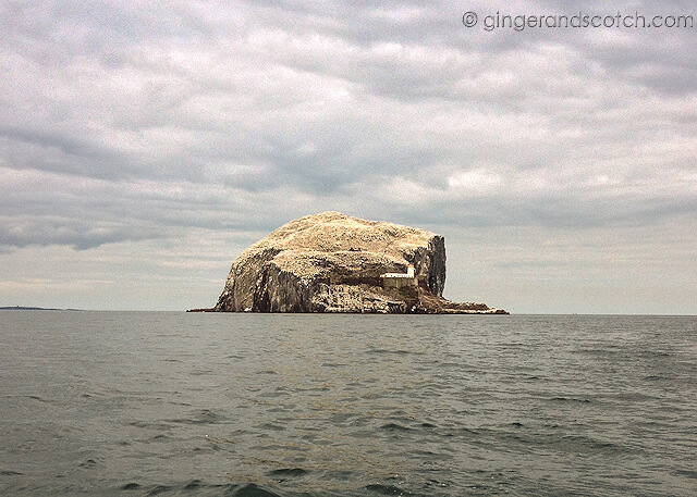Bass Rock from boat
