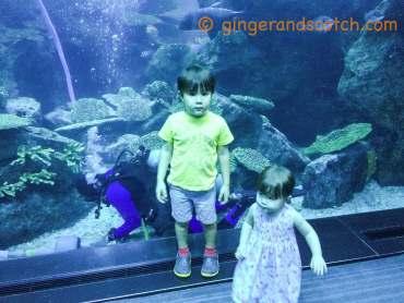Dubai Aquarium Zoo