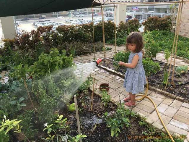My daughter watering the community rooftop garden - May 2016