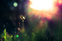 october-grass-6