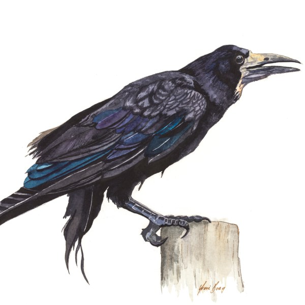 Watercolour Print of Rook Bird at Stonehenge