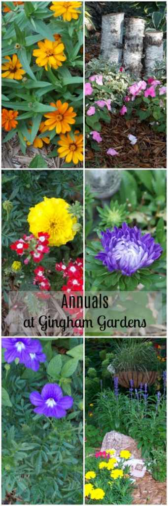 Annuals at Gingham Gardens