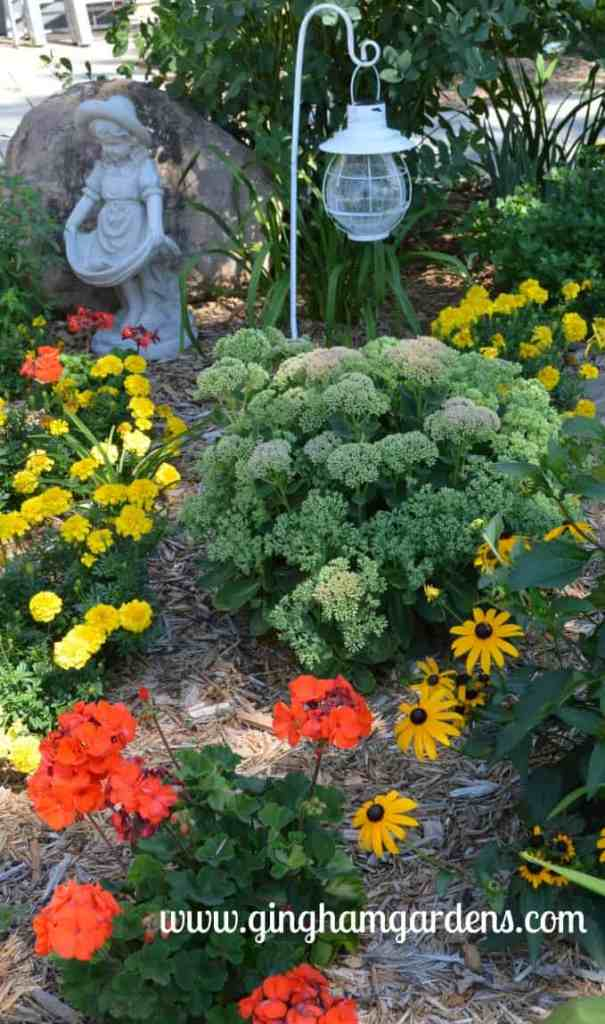 Autumn Joy Sedum, Geranium, Black-eyed Susan, Lemon Drop Marigold at Gingham Gardens