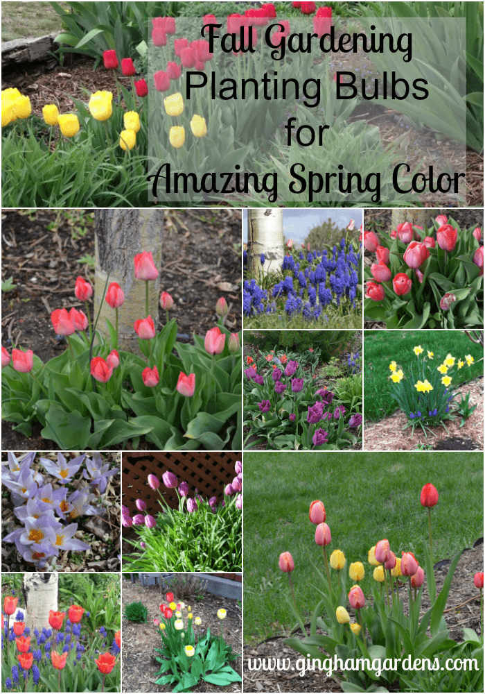 Fall Gardening - Planting Bulbs for Amazing Spring Flowers