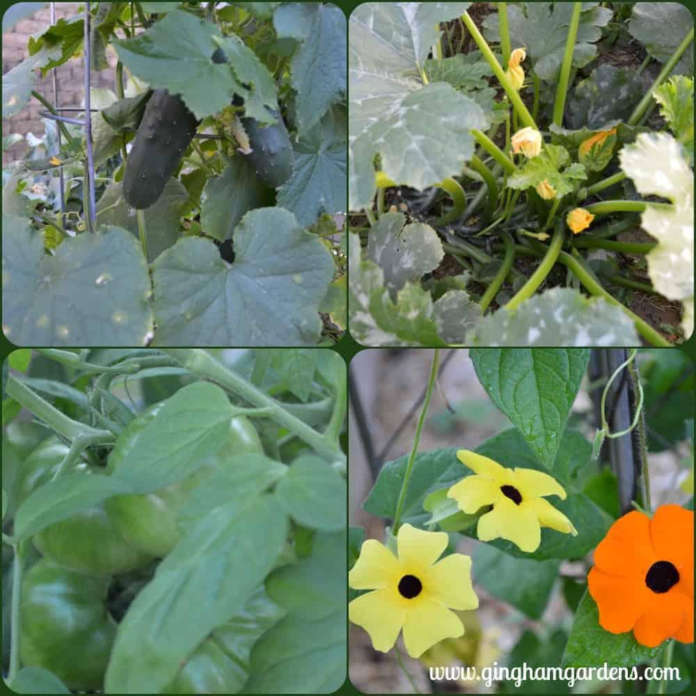 Veggies at Gingham Gardens Garden Tour