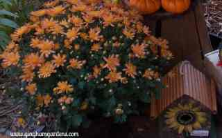 Fall Gardening – Quick & Easy Steps To Clean Up Gardens