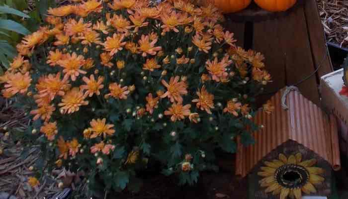 Fall Gardening Recap